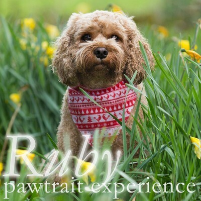 Ruby Dog Pawtrait Experience