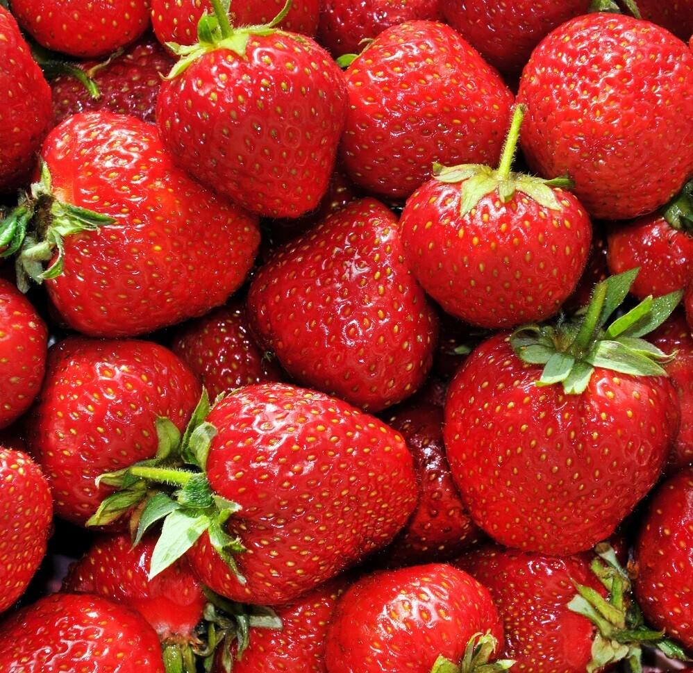 Berry, Strawberry QUART Ward's Berry Farm
