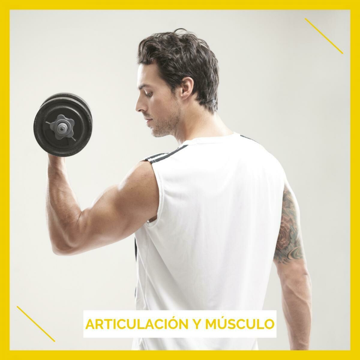 Articulaciones y muscular