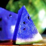 Blue Melon Salt Nic