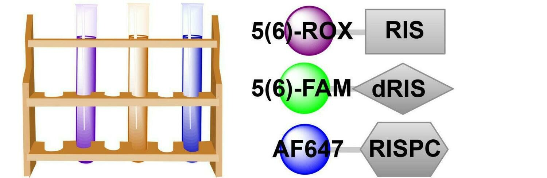 Three-Probe Bone Affinity Sampler