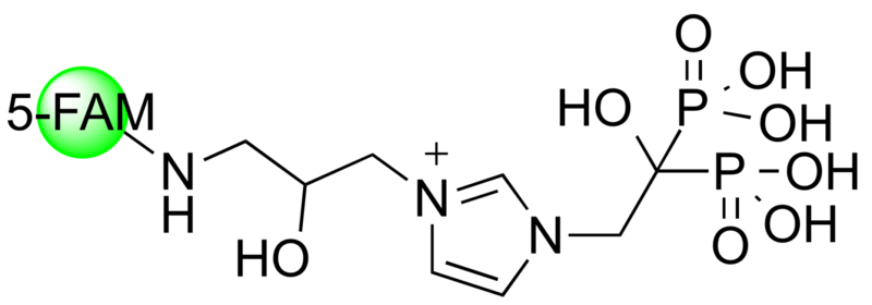 5-FAM-ZOL