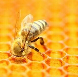 [Miel] Honig Frucht-Balsamico