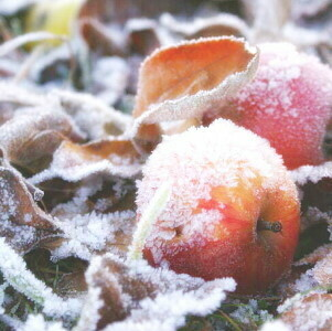 [Pomme au Four] Winterapfel Frucht Balsamico