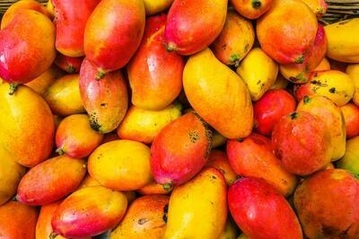 Gelat de Mango