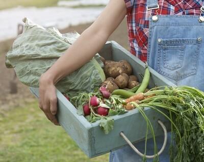 Oosthof pakket : rode kool, 1 savooi, 1 kg wortelen, 1 kg schorseneer