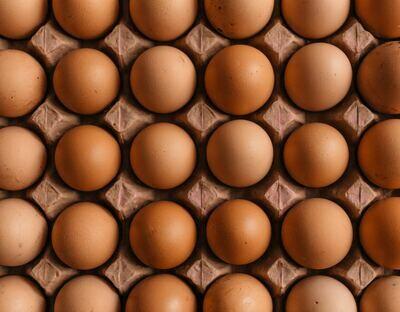 Oosthof 6 eieren