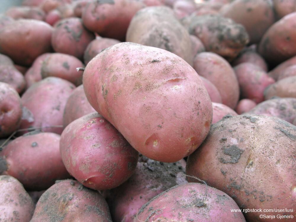 Groenten: Kapelhof zoete aardappel 1kg