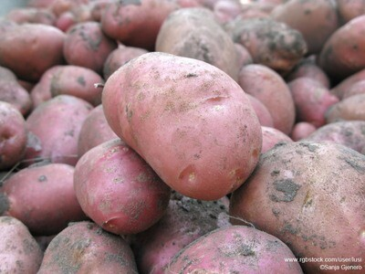 Kapelhof zoete aardappel