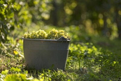 Drank: Klein Rijselhoek witte natuurwijn 1fles