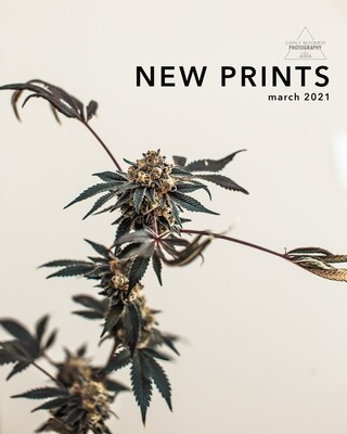 New Prints ♡