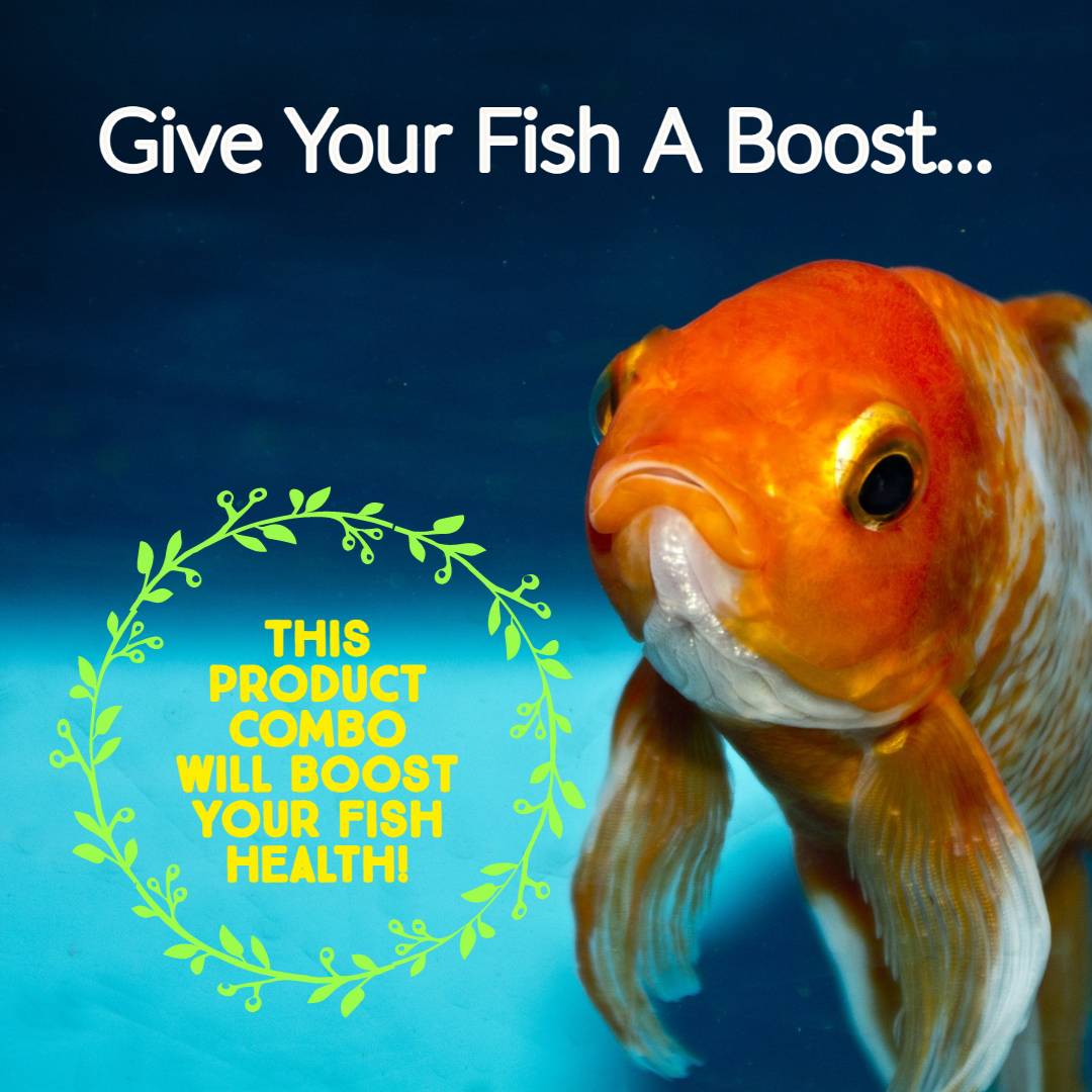 Immune Booster Combo Pack for Marine Fish ideal for 2500L