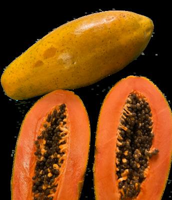 Flug Papaya