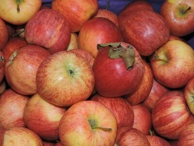 Äpfel Gala Royal 1kg