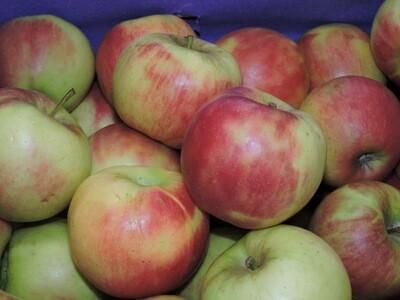 Äpfel Elstar 1kg
