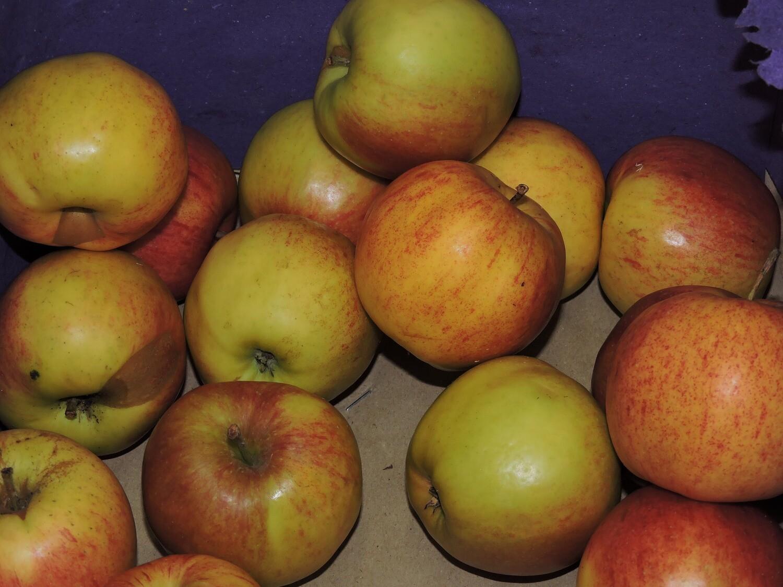 Äpfel Jonagold 1kg
