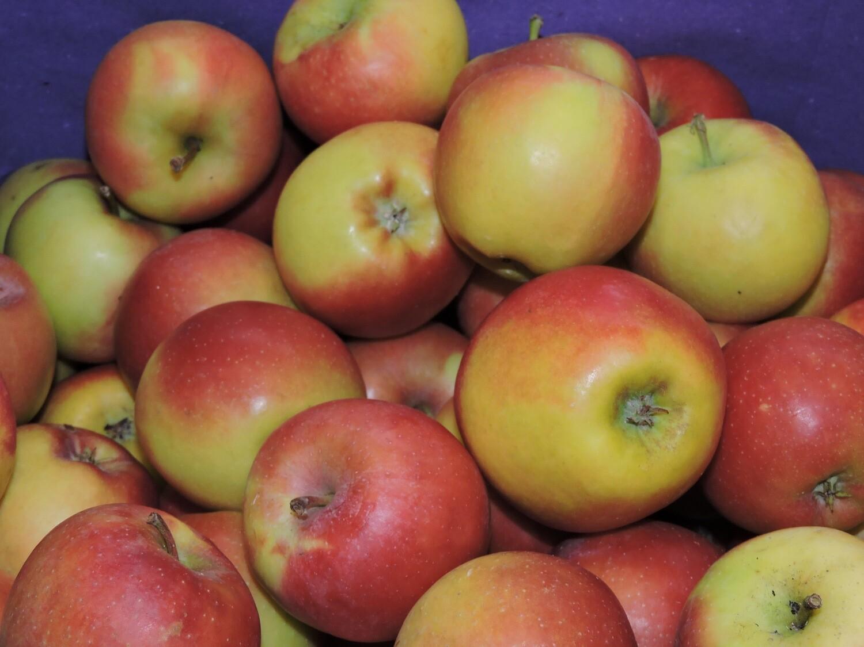 Äpfel Kanzi 1kg