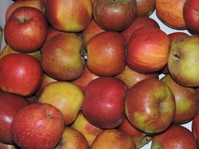 Äpfel Boskoop 1kg