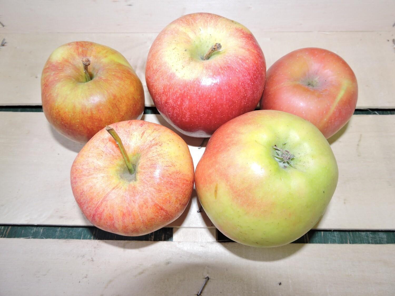 Äpfel Mischung 1kg