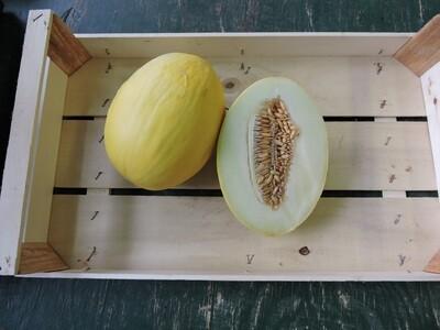 Honig Melone