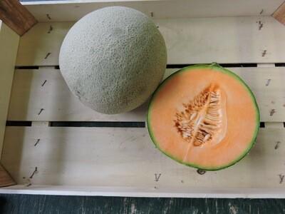 Canatlupe Melone