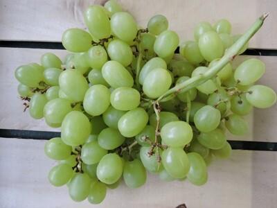 Trauben grün, kernlos 0,5Kg