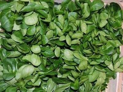 Feldsalat aus Franken, 250g