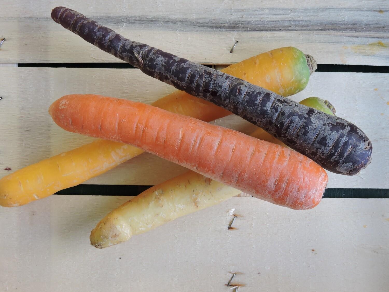 Karotten aus Franken, orange 6-8 Stk