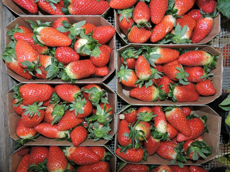 Erdbeeren 1 Schale 500g