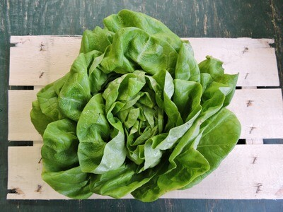 Kopfsalat aus Franken