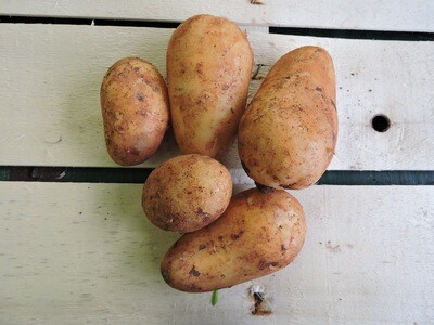 Kartoffeln festkochend, Annabelle 1 Kg