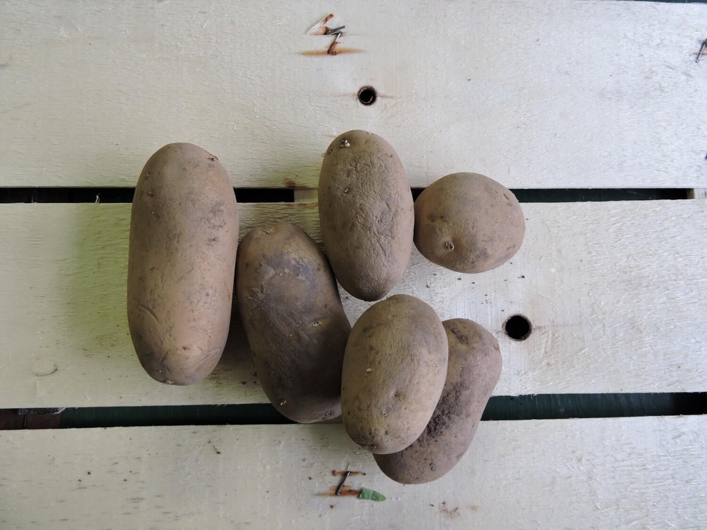 Kartoffeln aus Franken, festkochend, Annabelle 1 Kg