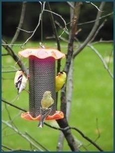 Hanging Forever Feeder Mini orange thistle feeder
