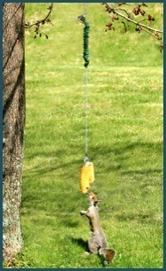 Squngee Deluxe hanging squirrel feeder