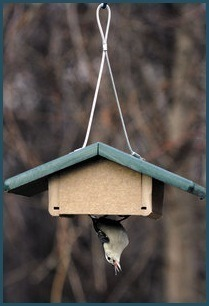 Hanging recycled upside-down single suet feeder