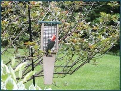 Hanging Recycled Pileated 2-suet Feeder by Birds Choice