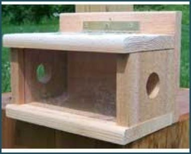Wooden post-mount mealworm feeder for bluebirds