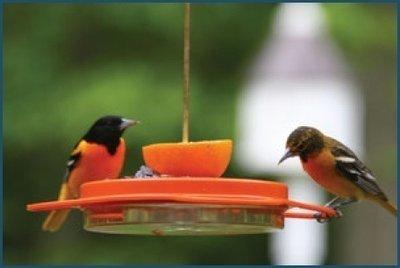 Oriolefest feeder