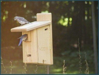 Cedar ultimate bluebird house