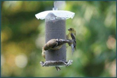 Hanging Forever Feeder Mini clear thistle feeder