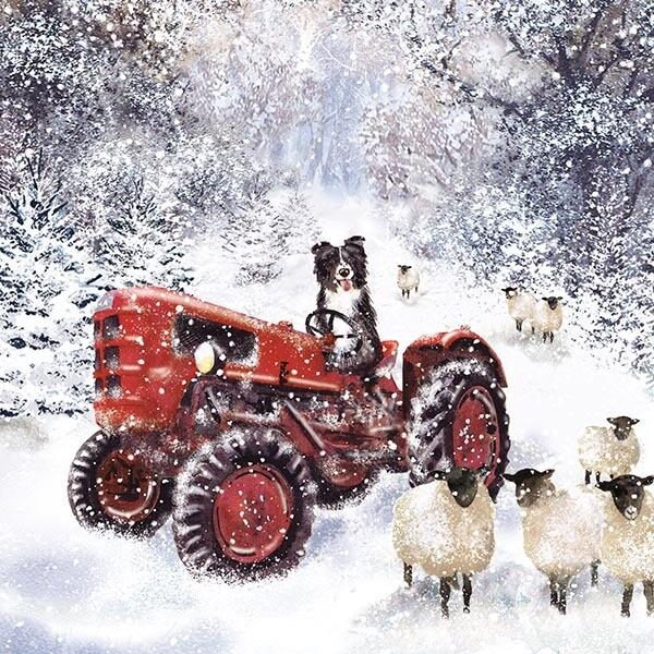 Shep's Tractor x 10