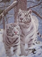 3D NON FRAMED WHITE TIGERS 293