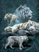 3D NON FRAMED WHITE TIGERS 969