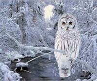 3D NON FRAMED SNOW OWL 942