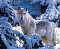 3D NON FRAMED WOLF IN SNOW 217