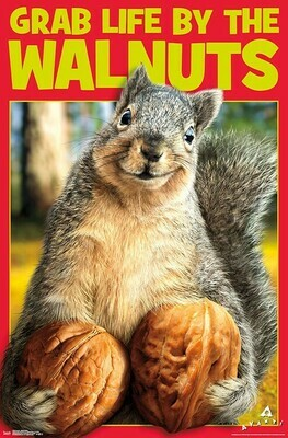 SQUIRREL NUTS ROLLED