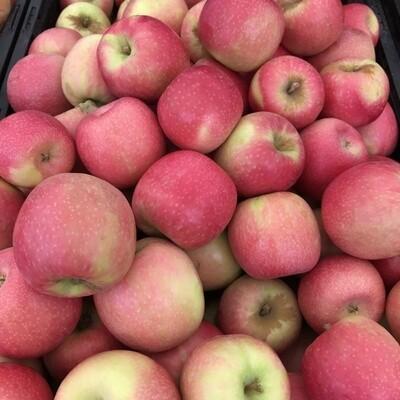 Pink Lady Apples, Organic - lb