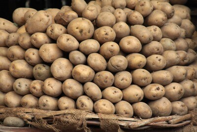 Potatoes Maris Piper 25kg Sack- Wroxeter
