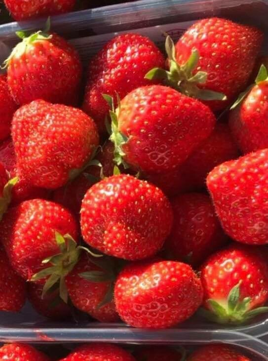 Strawberries - Best Dutch 500g