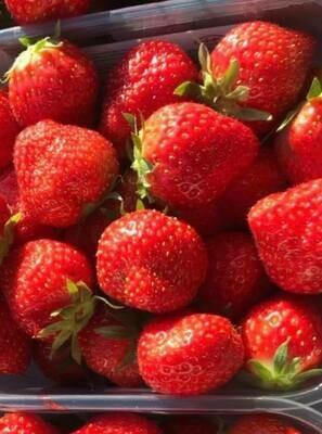 Strawberries - Spanish